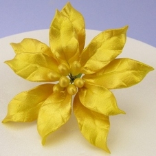 Gold Sugar Poinsettia
